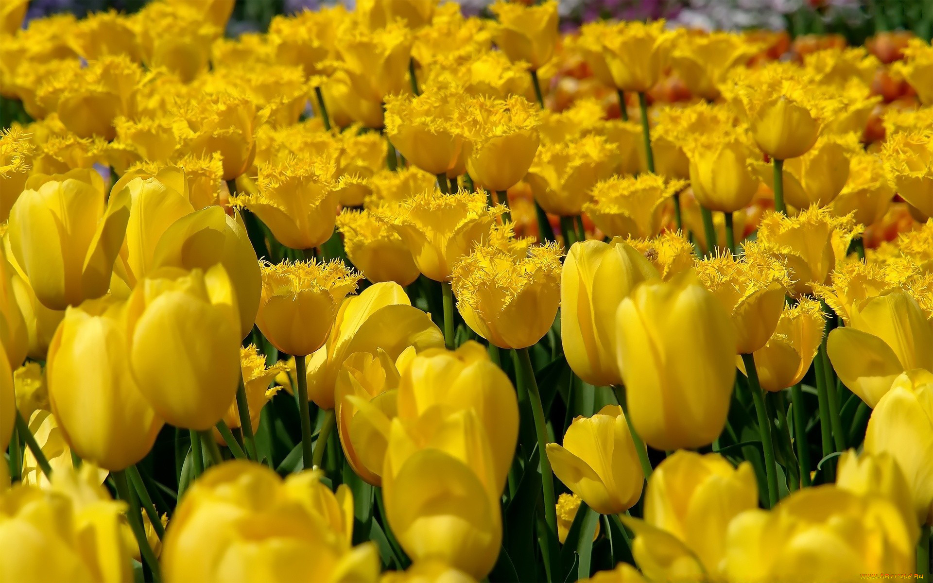желтые картинки смотреть